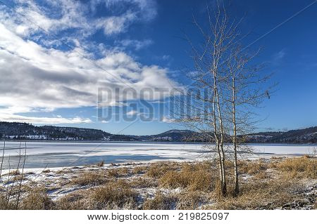 Tree by frozen lake in Idaho. A barren tree stands by a frozen lake in north Idaho.