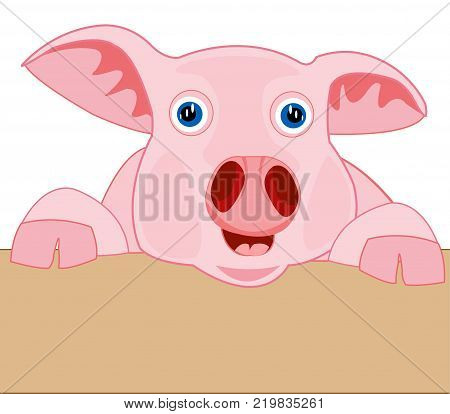 .Rose piglet peers out for fence.Vector illustration