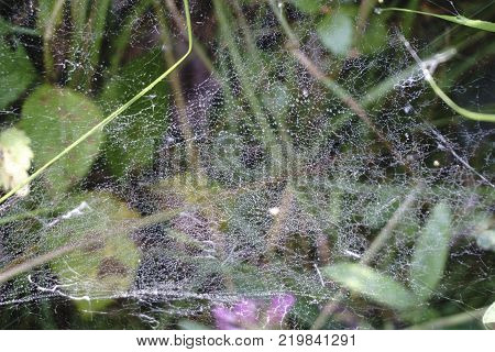 spider's web with dew drops background in dark color