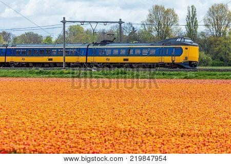 Zuid Holland the Netherlands - 23 April 2017: Dutch electric sprinter train passing flower fields