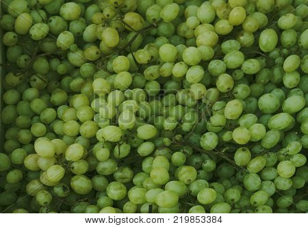 grapes background dark grapes blue grapes wine grapes