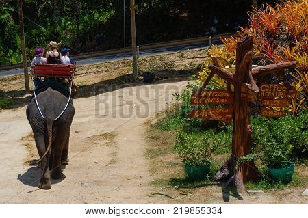 a Elephant with mahout sits on its back