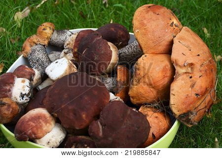 Raw mushrooms in the plate on green grass