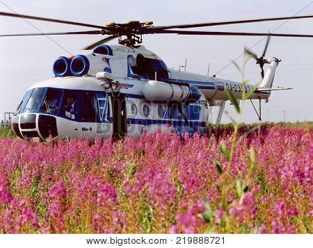 Salekhard, Russia - 15 July 2007: Mi-8 helicopter on the field of flowering tea willow.