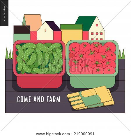 Urban farming, gardening or agriculture, harvest. Two containers filled with cucumbers and tomatos standing on the deck and gauntlets, with town houses on the background