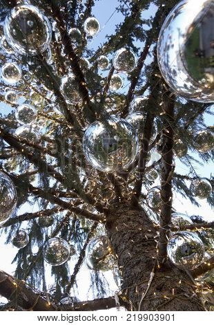 Rome's new Christmas tree is being ridiculed by residents of the Italian capital after it began losing its pine needles