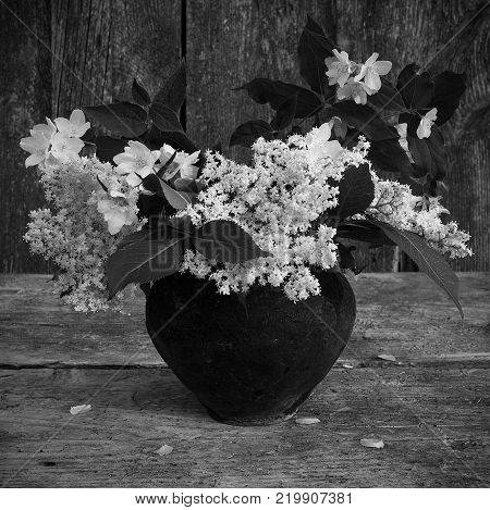 Black and white photo of the bouquet of elderberry flowers and mock orange flowers in a black ceramic pot