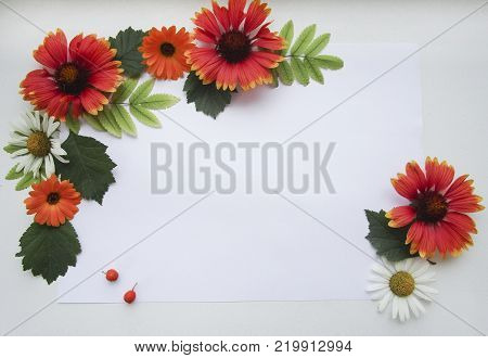 Flat lay composition with red orange gaillardia, white camomile, orange calendula flowers, ashberry, green rowan leaves and sheet of paper on white background for mockup, decorative frame, decoration