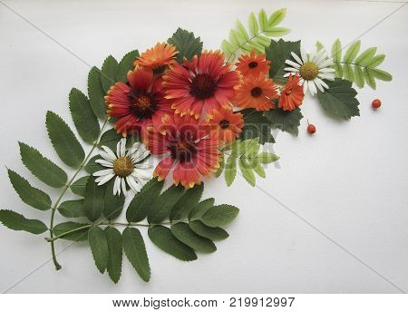 Flat lay composition of red yellow gaillardia, orange calendula, camomile flowers, ashberry and green rowan leaves in form of bouquet on white background for decoration, postcard, poster.
