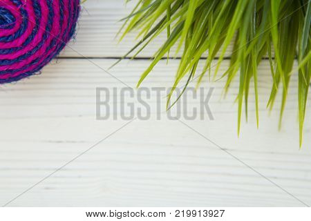 Pet care, veterinary, grooming concept. Pets having fun. A white wooden background with a blue and pink pet toy textile ball and green plant. Space for your text or image.