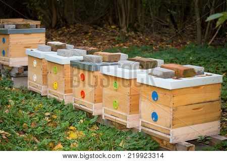 Wooden bee hives. Hives with bees in nature.