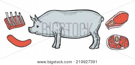 Hand drawn colored Pig, pork Meat ham cuts, parts, chop hand drawn butchery vector set. Engraved meat collection chalkboard.