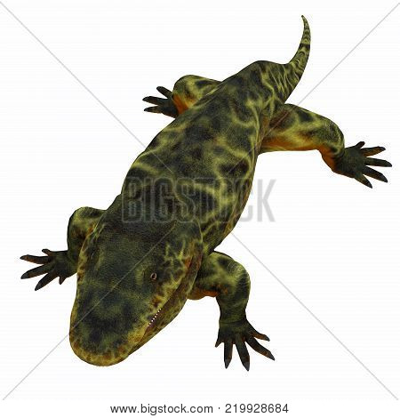 Eryops Dinosaur on White 3D illustration - Eryops was an semi-aquatic ambush predator much like the modern crocodile and lived in Texas, New Mexico and the Eastern USA in the Permian Period.