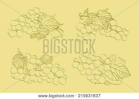 Four bunches of grapes on a light background