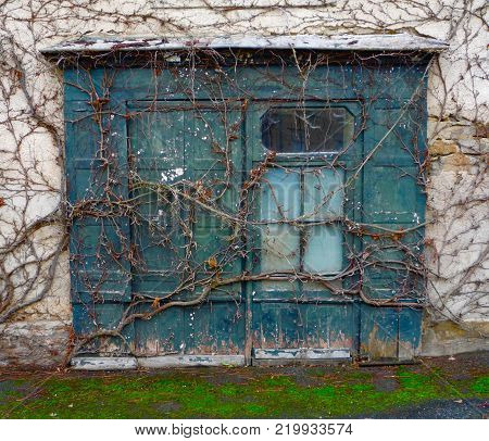 Derelict shop front overgrown with vines in France