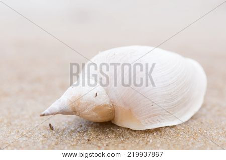 Alone white shell on a sand beach. Close-up