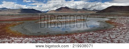 Bright autumn landscape on a high-mountainous lake, bright blue water around the shore with gruff red vegetation, blue sky with clouds, panorama.
