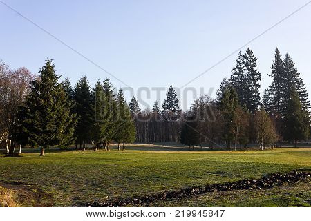Large flat grassland park with groupings of pine trees