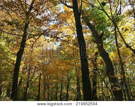 Early fall at Starved Rock State Park with trees starting to show color poster