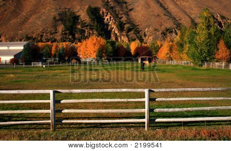 Autumn Horse Ranch