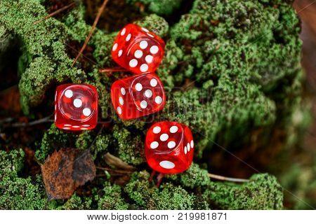 red transparent game blocks lie on a green stump