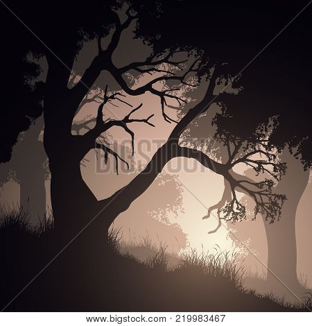 Square vector illustration of tree trunks within forest with grass.
