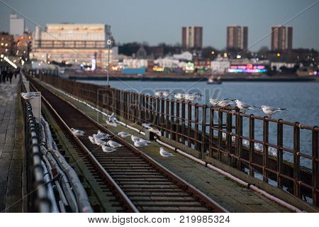 Seagulls on the track of Southend-on-Sea Pier