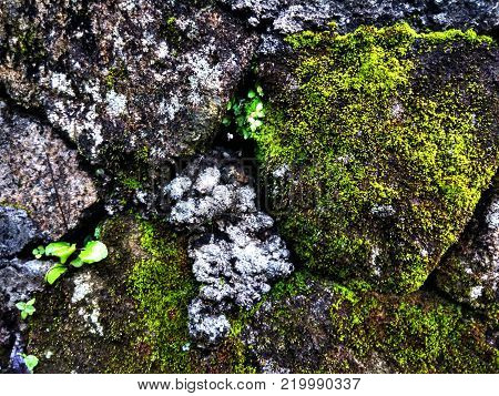 Mossy stone wall texture rough. Rough stone walls of ancient buildings.