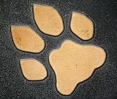 Wild Cat Paw Print Isolated on Black poster