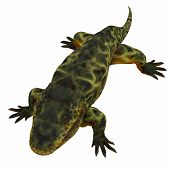 Eryops Dinosaur on White 3D illustration - Eryops was an semi-aquatic ambush predator much like the modern crocodile and lived in Texas, New Mexico and the Eastern USA in the Permian Period. poster