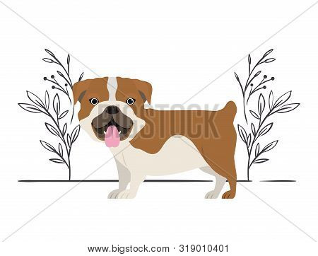 Cute Bulldog Ingles Dog On White Background Vector Illustration Design
