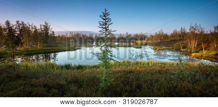 Beautiful Summer Northern Siberian Wild Landscape, A Lonely Spruce Larch By A Lake Or Swamp, Panoram