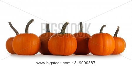 Perfect orange pumpkins in a row isolated on white background , Halloween concept