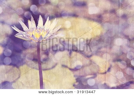 closeup of purple lily in pond over grunge aged texture background with copy space