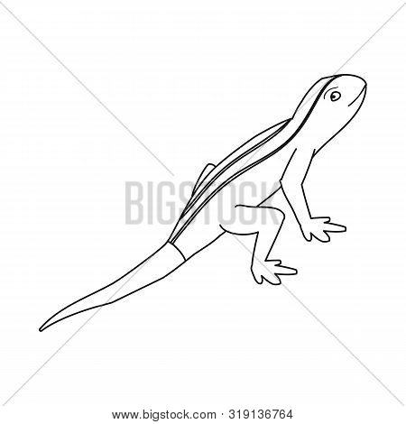 Vector Illustration Of Lizard And Tail Logo. Collection Of Lizard And Iguana Stock Vector Illustrati