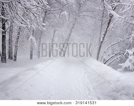 Heavy Snowing, Snow-covered Path And Stuck Snow On The Branches Of Trees. Park In The Snowy Winterti