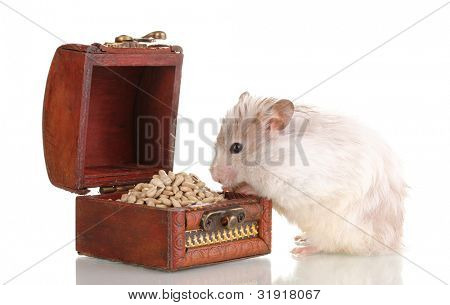 Cute hamster and chest with seeds isolated white poster