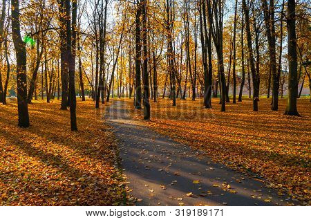 Fall landscape - yellowed fall trees and fallen fall leaves in city park fall alley in sunny evening. Picturesque park fall scene