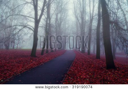 Fall November foggy park landscape. Deserted fall park alley with bare trees and dry fallen orange fall leaves, mysterious fall scene