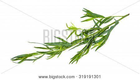Twig Of Fresh Tarragon (estragon) Isolated On White Background