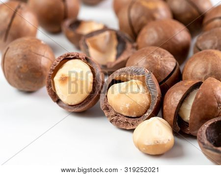 Set Of Macadamia Nuts On White Background With Copy Space. Set Of Macadamia Nuts - Whole Unshelled,