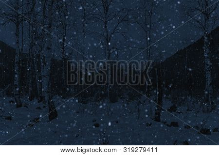 Winter Snowfall In Forest And Snow On Ground, Night Light Photo, Monotone Image