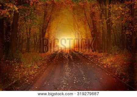Beautiful autumn landscape.Fantasy background . Magic forest.