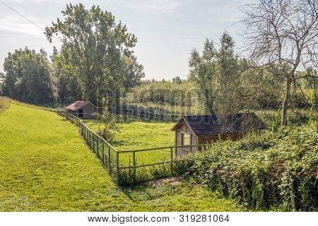 Two Small Wooden Sheds And Wooden Fence With Mesh And A White Chicken. It Is A Sunny Day In The Dutc