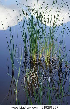Vertical Shot. The Sky Is Reflected On The Surface Of The Water. Growing Reeds Near The Lake. Warm,
