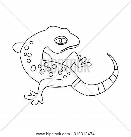 Isolated Object Of Gecko And Lizard Logo. Set Of Gecko And Cute Vector Icon For Stock.