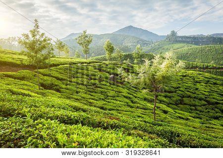 Kerala India travel background - panorama of green tea plantations in Munnar, Kerala, India in the morning on sunrise