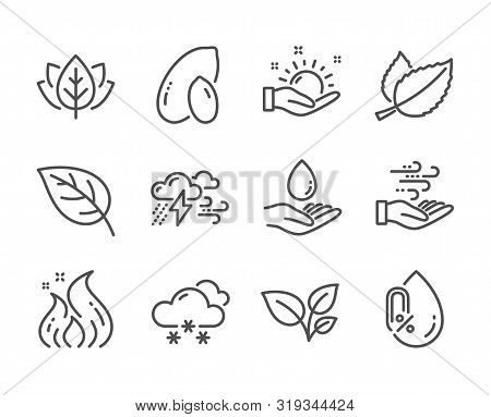 Set Of Nature Icons, Such As Peanut, Leaves, Organic Tested, Water Care, Mint Leaves, Wind Energy, B