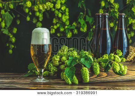 Beer And Hop Plant. Still Life With Beer And Hop Plant In Retro Style. Glass Of Cold Foamy Beer Brow
