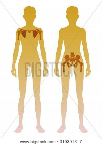Woman silhouette with skeleton of the shoulder girdle and pelvic girdle location on body. Illustration poster